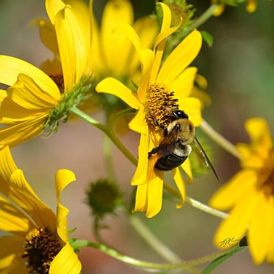 Photograph - Bumblebee On Bidens Mitis by rd Erickson