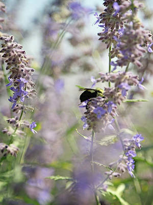 Color Of The Year Photograph - Bumblebee On Lavender And Green by Brooke T Ryan