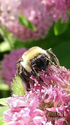 Photograph - Bumblebee One by J L Zarek