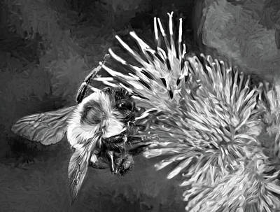 Photograph - Bumbling In The Burdock 2 - Paint Bw by Steve Harrington