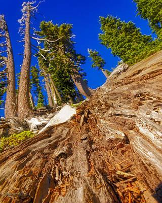 Photograph - Bumpass Hell Tree Down by LeeAnn McLaneGoetz McLaneGoetzStudioLLCcom