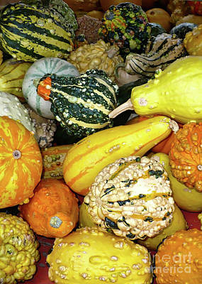 Photograph - Bumpy Gourds by Carol Groenen