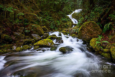 Bunch Creek Falls In The Olympic National Park Of Wash Art Print