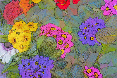 Lilac Drawing - Bunch Of Colorful Primroses by Valter Giumetti
