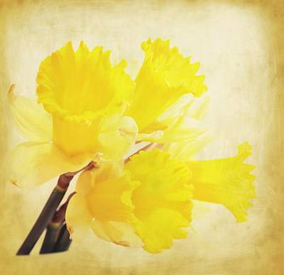 Oregon Art Digital Art - Bunch Of Daffodils by Cathie Tyler