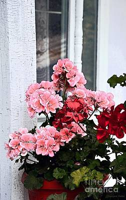 Photograph - Bunch Of Geraniums by Ramona Matei