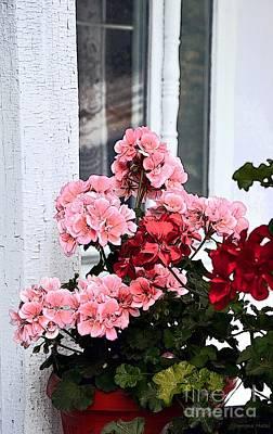 Photograph - Bunch Of Geraniums by Ramona Matei