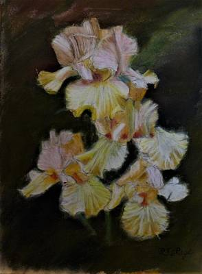 Pastel - Bunch Of Iris by Richard Le Page