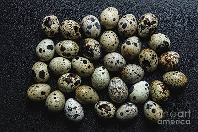 Photograph - Bunch Of Raw Spotted Quail Eggs by Michal Bednarek