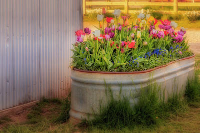 Photograph - Bunch Of Tulips by Susan Candelario