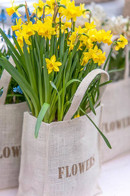 Photograph - Bunch Of Yellow Daffodils by Jenny Rainbow