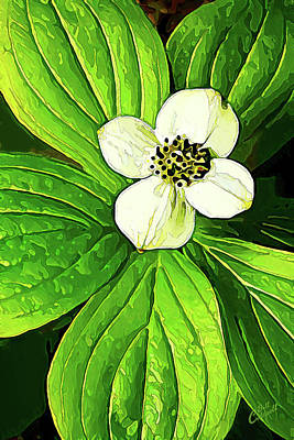Photograph - Bunchberry Blossom 2 by ABeautifulSky Photography by Bill Caldwell