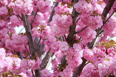 Bunches Of Pink Blossoms Art Print