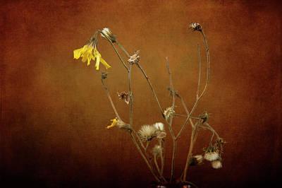 Photograph - Bundle Of Pretty by Randi Grace Nilsberg