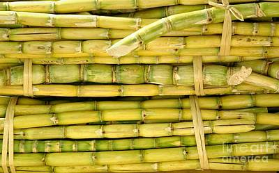 Photograph - Bundles Of Sugar Cane by Yali Shi