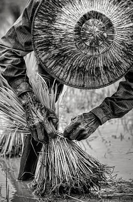 Lee Craker Royalty-Free and Rights-Managed Images - Bundling Rice by Lee Craker