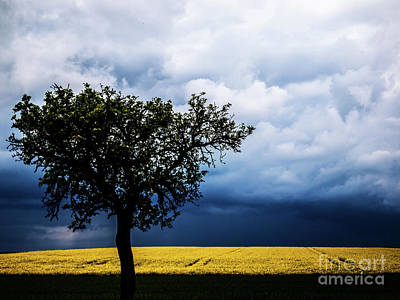 Photograph - Bliesgau_15 by Jorg Becker