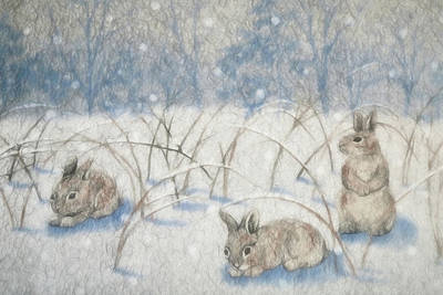 Photograph - Bunnies In The Snow by Donna Kennedy