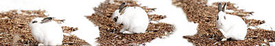 Photograph - Bunnies Three by Lisa Knechtel