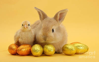 Photograph - Bunny And Chick At Easter by Warren Photographic