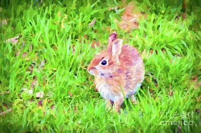 Photograph - Bunny Beautiful by Kerri Farley