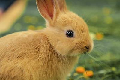 Photograph - Bunny Chomp by Stewart Scott
