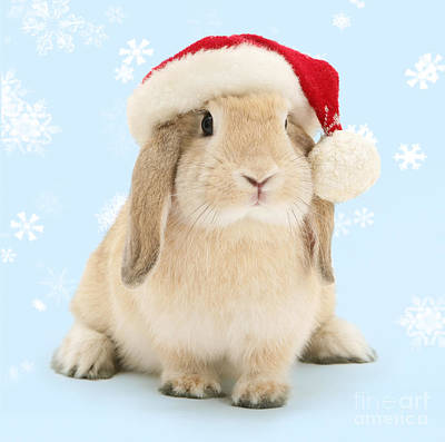 Photograph - Bunny Christmas Everyone by Warren Photographic