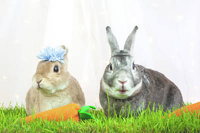Photograph - Bunny Conversation by Jeanette Fellows