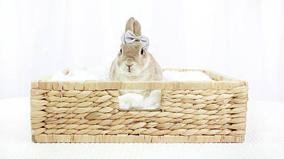Photograph - Bunny In A Basket by Jeanette Fellows