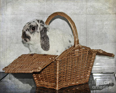 Photograph - Bunny In A Basket by Terri Waters