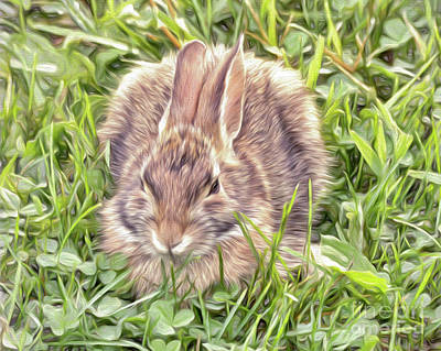 Photograph - Bunny In The Clover by Kerri Farley