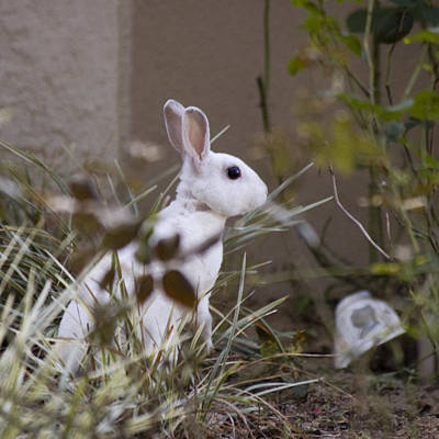 Bunny In The Garden Art Print by Anthony Towers