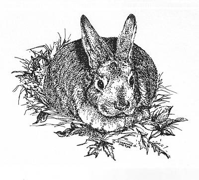 Drawing - Bunny In The Leaves by Suzanne McKee
