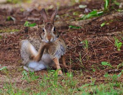 Photograph - Bunny Itch by Eileen Brymer