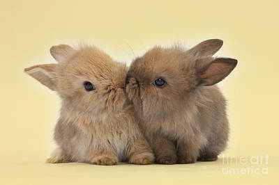 Photograph - Bunny Kisses by Warren Photographic