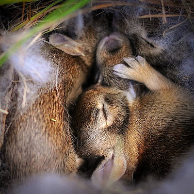 Photograph - Bunny Lullaby by Gene Tatroe