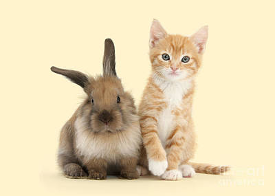 Photograph - Bunny Marvelous And Purrfectly Formed by Warren Photographic