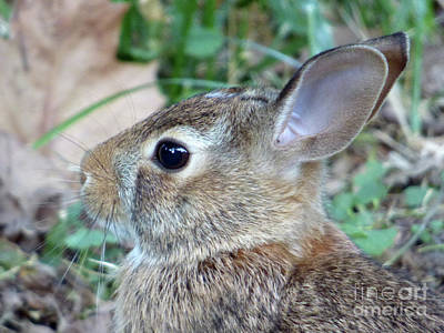 Photograph - Bunny Portrait by Leara Nicole Morris-Clark