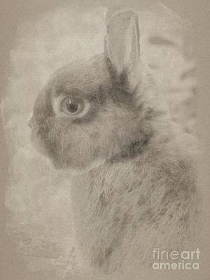 Animals Drawings - Bunny Rabbit by Esoterica Art Agency
