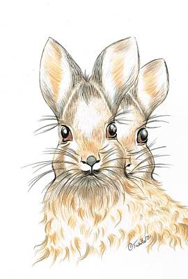 Drawing - Bunny Rabbits  by Teresa White