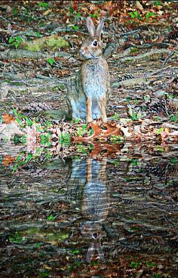 Photograph - Bunny Reflection by Joe Duket