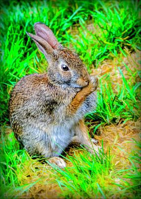 Hare Photograph - Bunny Secrets by LeeAnn McLaneGoetz McLaneGoetzStudioLLCcom
