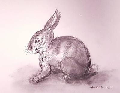 Drawing - Bunny Sketch  by Hae Kim