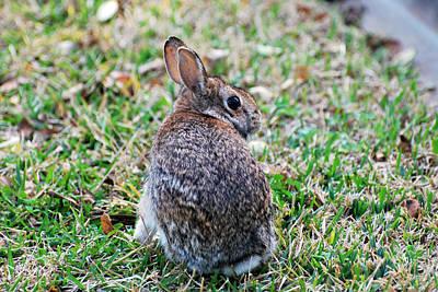 Photograph - Bunny by Teresa Blanton