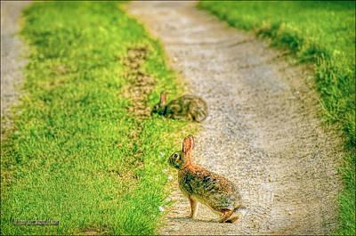 Hare Photograph - Bunny Trals by LeeAnn McLaneGoetz McLaneGoetzStudioLLCcom