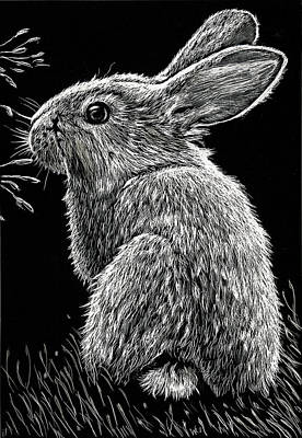 Drawing - Bunny by William Underwood