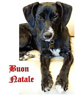 Photograph - Buon Natale Cane by Dorothy Berry-Lound