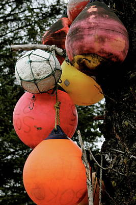 Photograph - Buoy Decorated Tree by Brandy Little