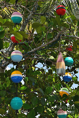 Photograph - Buoys On A Tree by Olga Hamilton