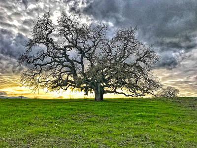 Photograph - Burdell Tree by Dan Reich
